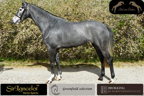 Gonolia - Cantos x Royal Bravoure stand2
